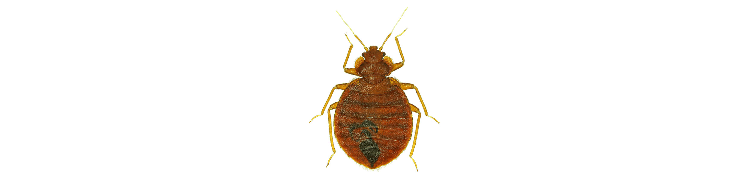 ACE Exterminating-Pest-Control-Bed-Bug-Header