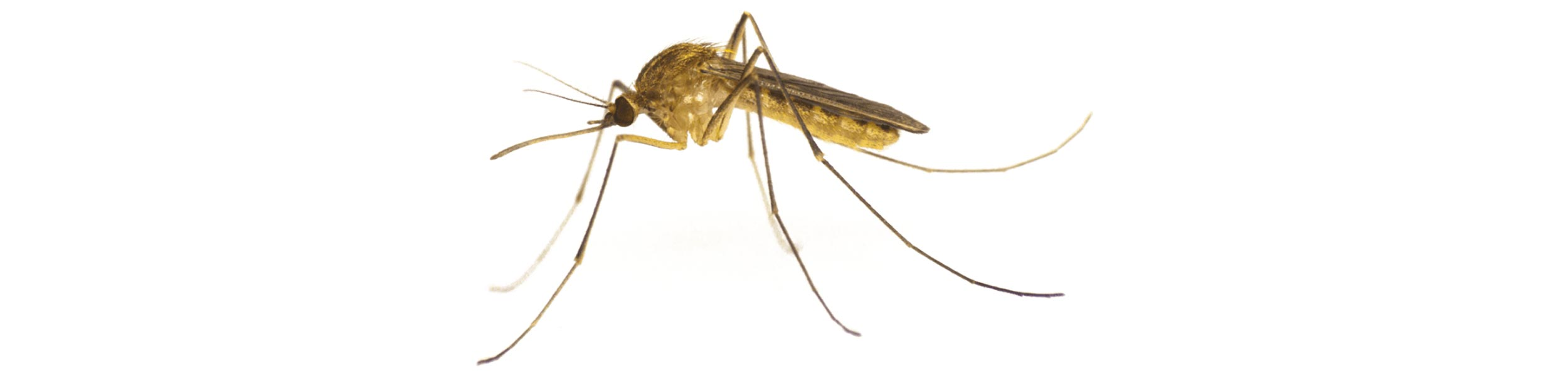 ACE Exterminating-Pest-Control-Mosquito-Close-Header