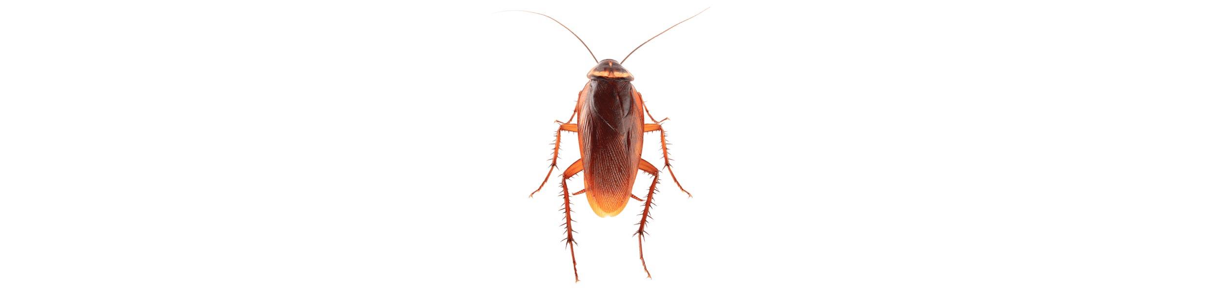 ACE Exterminating-Pest-Control-Roach-Header