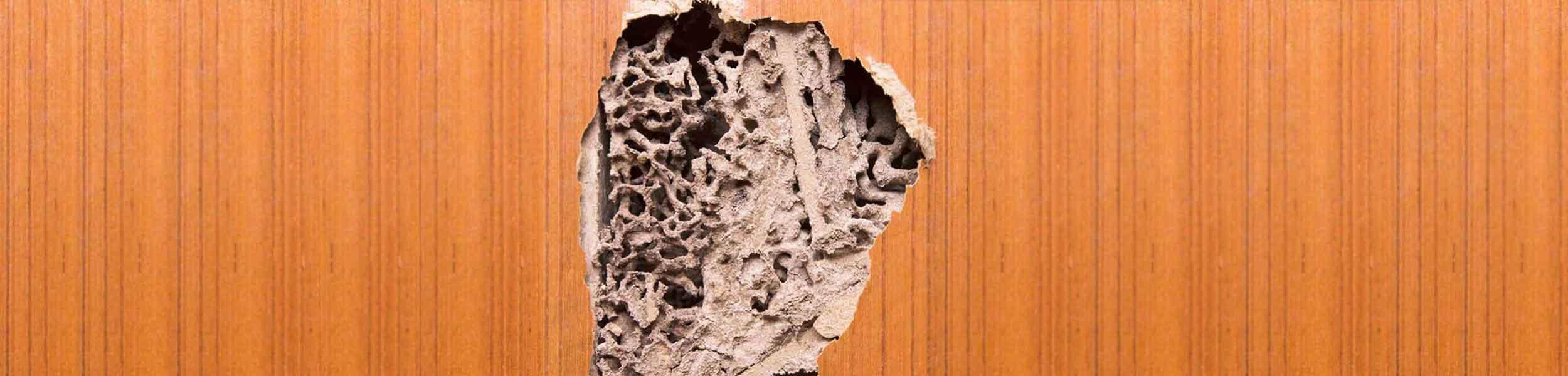 ACE Exterminating Pest Control - Termite Infestation Damage - Slider