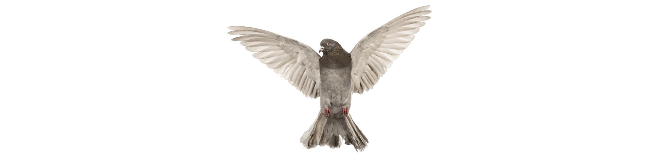 ACE Exterminating-Pest-Control-bird-photo