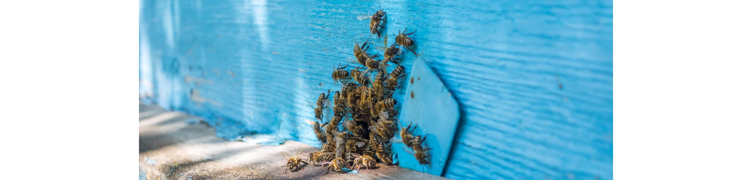 ACE Exterminating-Pest-Services-Bees-Swarm-Hole-Header