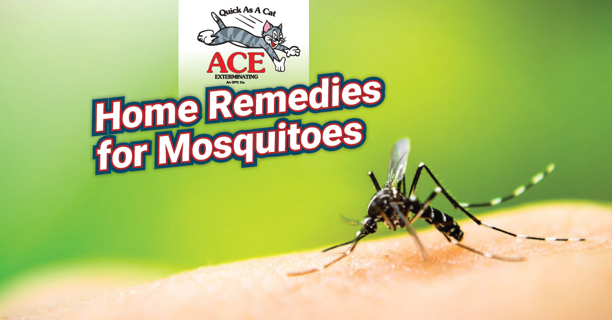You are currently viewing Home Remedies For Mosquitoes